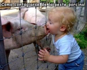 20090501110146_como-coger-la-peste-porcina1